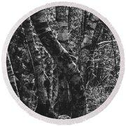 Birch Tree Forest Round Beach Towel