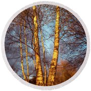 Birch Tree In Golden Hour Round Beach Towel