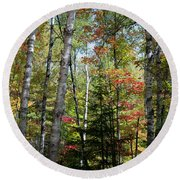Birches In Fall Forest Round Beach Towel