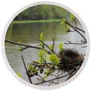 Bird Nest In Ash Tree Branches Round Beach Towel