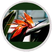 Bird Of Paradise 2 Round Beach Towel
