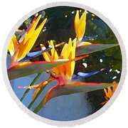 Bird Of Paradise Backlit By Sun Round Beach Towel