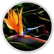 Bird Of Paradise Flower Round Beach Towel by Brian Harig