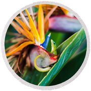 Bird Of Paradise Gecko Round Beach Towel