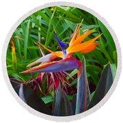 Bird Of Paradise Kalon Round Beach Towel
