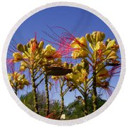 Bird Of Paradise Shrub Round Beach Towel