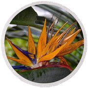 Bird Of Paradise Work Number Three Round Beach Towel