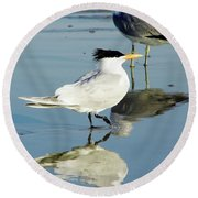 Bird - Tern - Reflection Round Beach Towel