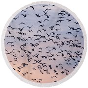 Birds A Flock Of Seagulls Round Beach Towel