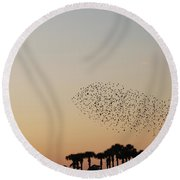 Birds In The Sun Round Beach Towel