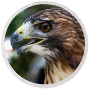 Birds Of Prey Series Round Beach Towel
