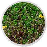Birdsfoot Trefoil Surrounded By Tiny Bright Eyes In Campground In Saginaw-minnesota Round Beach Towel