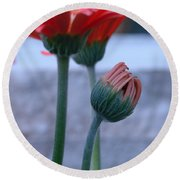 Birth Of A Flower Round Beach Towel