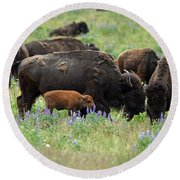 Bison And Lupine Round Beach Towel