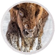Bison Approaching  8163 Round Beach Towel