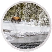 Bison Country  8101 Round Beach Towel