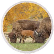 Bison Family Nation Round Beach Towel