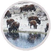 Bison Snow Reflecton Round Beach Towel