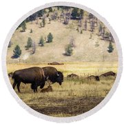 Bison With Calf Round Beach Towel