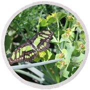 Black And Green Butterfly Round Beach Towel