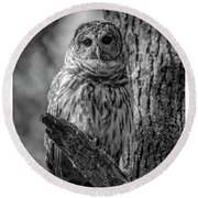 Black And White Barred Owl Round Beach Towel