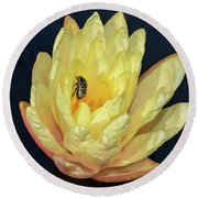 Black And White Beetle On Yellow Pond Lily Round Beach Towel