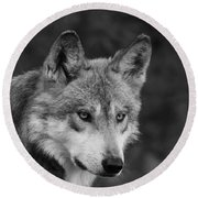 Black And White Mexican Wolf #4 Round Beach Towel