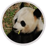 Black And White Panda Bear Eating Green Bamboo Shoots Round Beach Towel