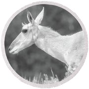 Black And White Pronghorn Portrait Round Beach Towel