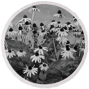 Black And White Susans Round Beach Towel