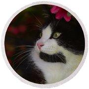 Black And White Tuxedo Cat Round Beach Towel
