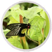 Black And Yellow Butterfly Round Beach Towel