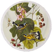 Black And Yellow Warbler Round Beach Towel