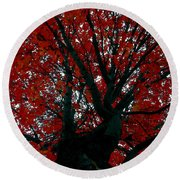 Black Bark Red Tree Round Beach Towel