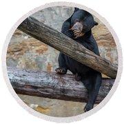 Black Bear Cub Sitting On Tree Trunk Round Beach Towel
