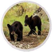 Black Bear Cubs Round Beach Towel