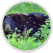 A Florida Black Bear Round Beach Towel