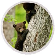 Black Bear Pictures 84 Round Beach Towel