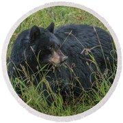 Black Bear Sow Round Beach Towel