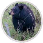 Black Bear Yellowstone Np_grk7085_05222018 Round Beach Towel