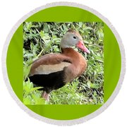 Black Bellied Whistling Duck Round Beach Towel