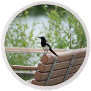 Black-billed Magpie Pica Hudsonia Round Beach Towel