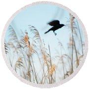 Black Bird In Cat Tails Round Beach Towel