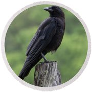 Black Crow Pearched On A Post Round Beach Towel