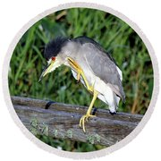 Black Crown Night Heron Scratching Round Beach Towel