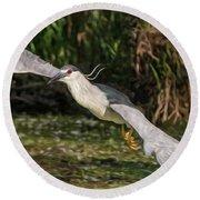 Black-crowned Night Heron In Flight Round Beach Towel