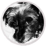 Black Dog Looking At You Round Beach Towel
