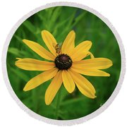 Black Eyed Susan And Friends Round Beach Towel