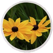 Black-eyed Susan Blossoms Round Beach Towel