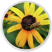 Black-eyed Susan With Soldier Beetle  Round Beach Towel